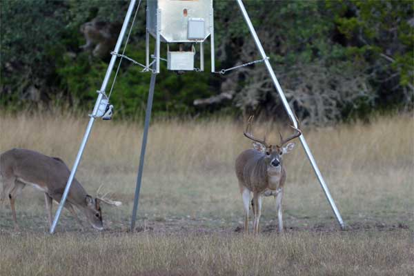 Whitetail Deer Hunts at Rancho Madrono in the Texas Hill Country