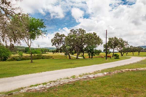 Horses Graze at Rancho Madrono, Pipe Creek, Texas