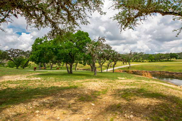 Horses and Beautiful Grounds at Rancho Madrono