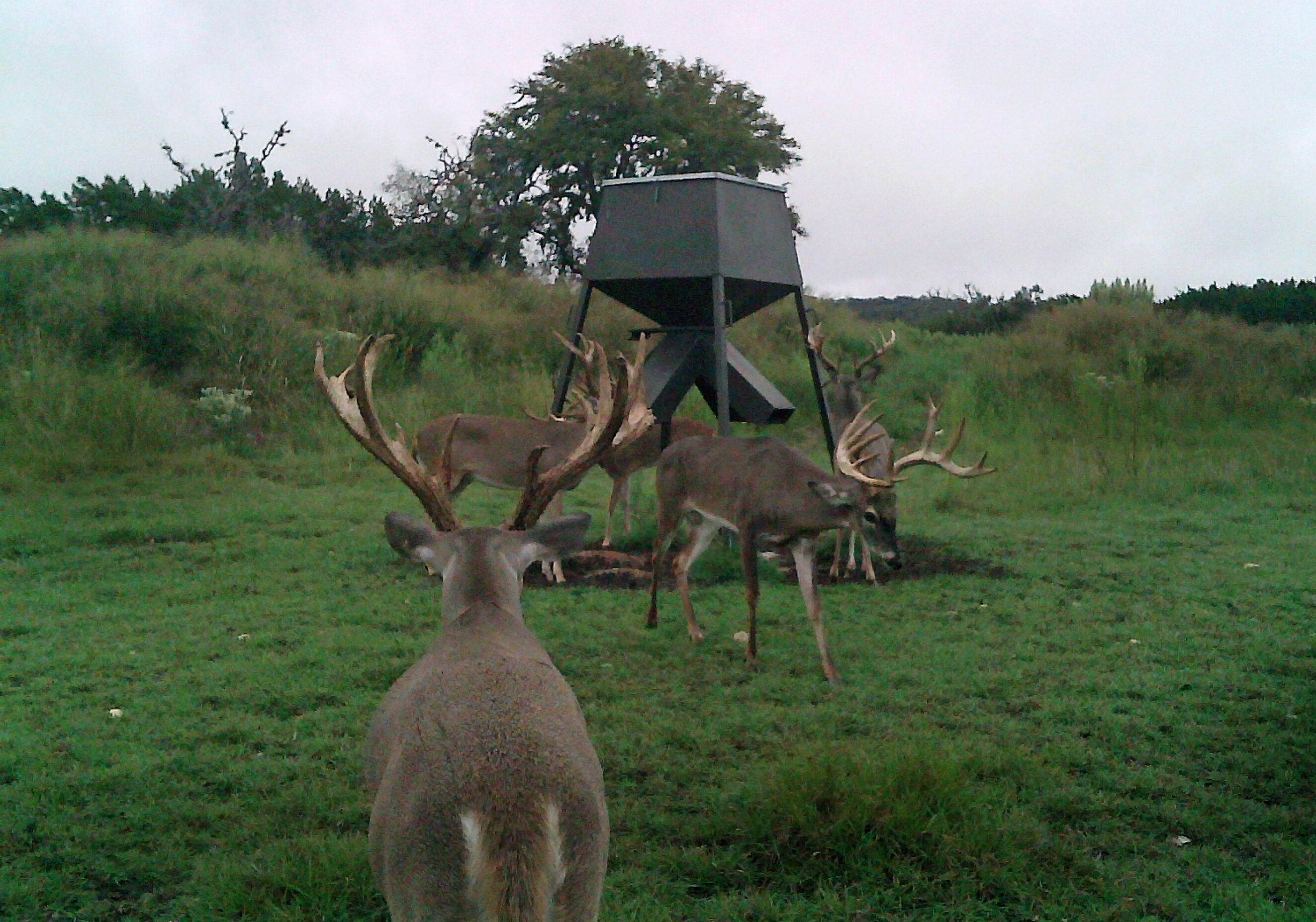 Corporate Deer Hunting Trips on Texas Hunting Ranch