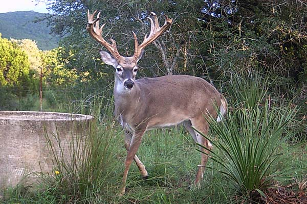 Texas Deer Hunting Ranch, Rancho Madrono