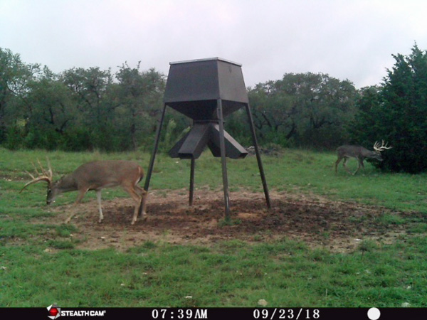 Texas Hill Country Whitetail Hunts at Rancho Madroño