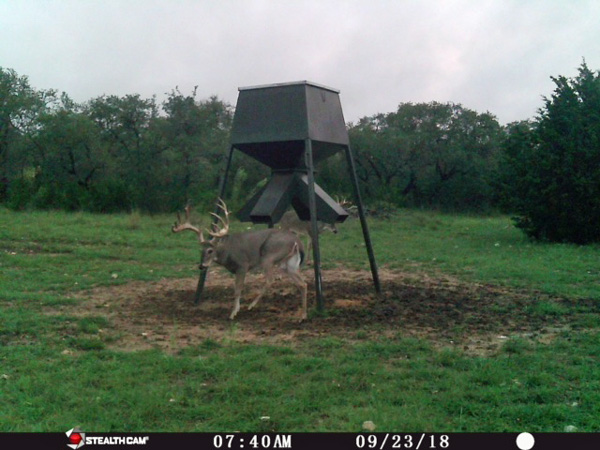 South Texas Stock Trophy Buck Hunts for Whitetails