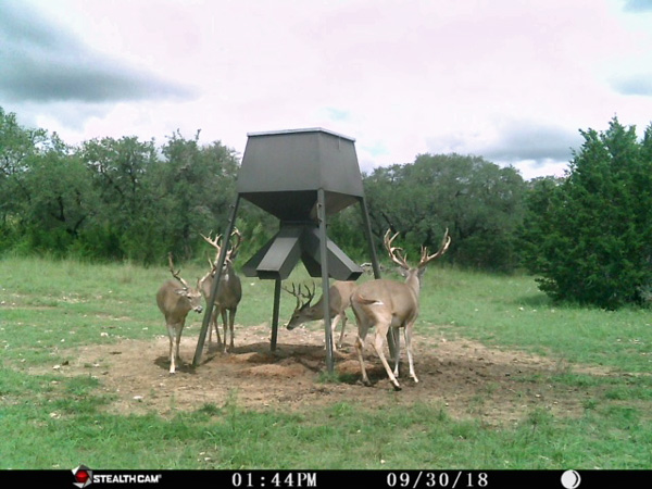 Dream Bucks Abound on Rancho Madroño, a Texas Hunting Ranch in the Hill Country Near San Antonio