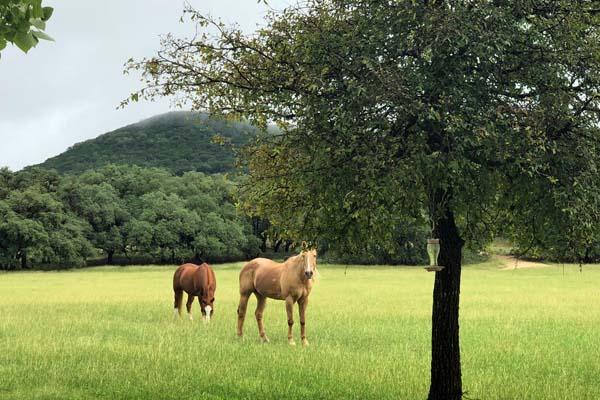 Horses in pasture at Rancho Madrono