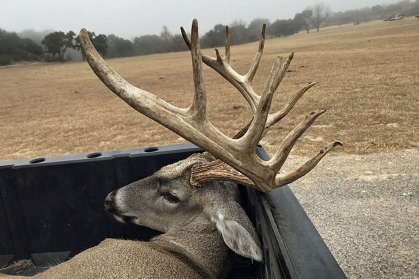 Large Whitetail Buck harvested during Waychoff hunt