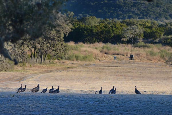 Turkey Hunts offered at Rancho Madrono in Texas Hill Country