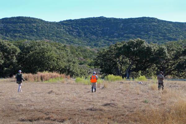 Pheasant and Quail Hunts at Rancho Madrono