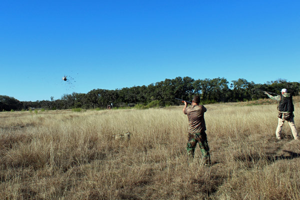 Shooting Pheasnts over dogs at Texas Hunting Ranch